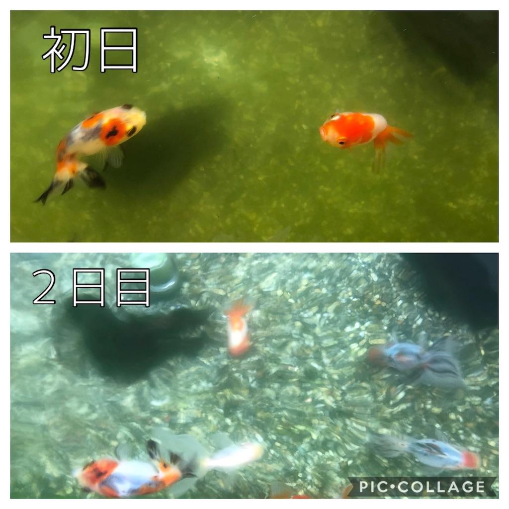 f:id:prettyfish:20190409124621j:image