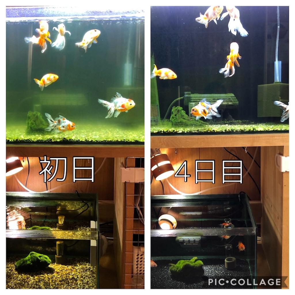 f:id:prettyfish:20190411194143j:image