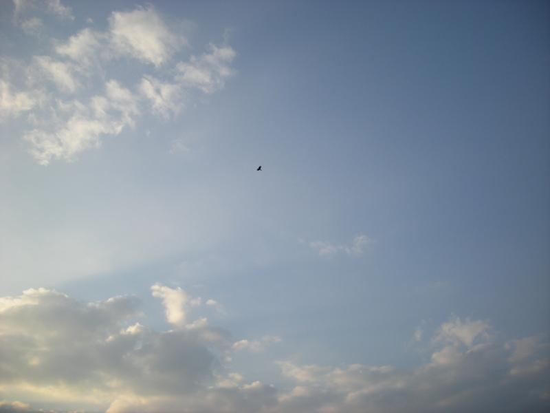 カラスは飛んでいく