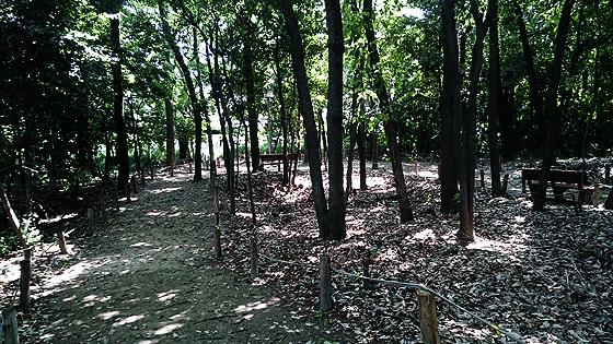 一宮市地域文化センターの森