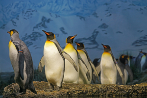 ペンギンの数え方