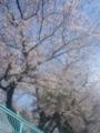 バーチャルお花見用画像