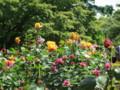 花ごよみ バラ@旧古河庭園