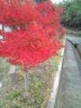 近所の紅葉 #2