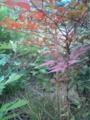 近所の紅葉 #3