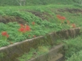 1.10.2012 石川r116 #1