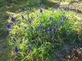 18.4.2012 自宅隣家の花壇 #2