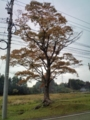 5.11.2012 石川r116 #1