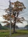 5.11.2012 石川r116 #2