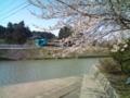 13.4.2013 二宮川の桜 #2