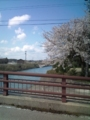 13.4.2013 二宮川の桜 #4