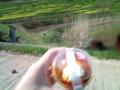 15.4.2013 菜の花畑でプリン