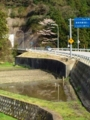 R160 トンネルそばの桜 #5