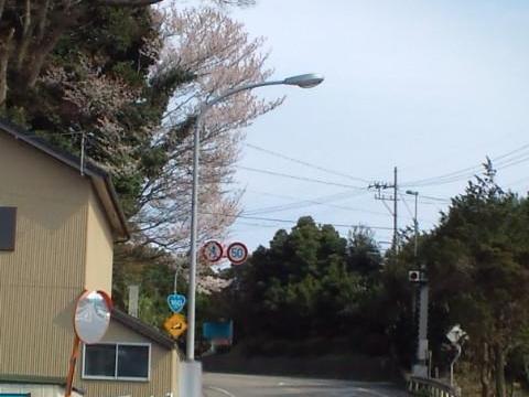 R160 桜花 #3