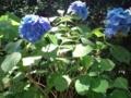 8.7.2013 山の寺寺院群の紫陽花 #2