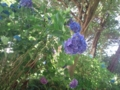 8.7.2013 山の寺寺院群の紫陽花 #3