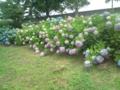 4.7.2013 七尾市藤橋町の紫陽花 #2