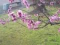 29.3.2013 希望の丘公園 #3