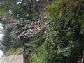 8.4.2013 七尾市白浜町 #2