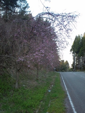 13.4.2013 七尾市赤蔵山 #1