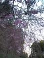 13.4.2013 七尾市赤蔵山 #2