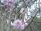 13.4.2013 七尾市赤蔵山 #4
