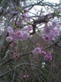 13.4.2013 七尾市赤蔵山 #5