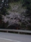 25.4.2013 七尾市満仁町 #1