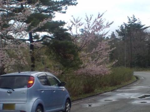 26.4.2013 七尾市わくらの郷公園 #2