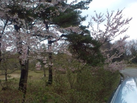26.4.2013 七尾市わくらの郷公園 #3