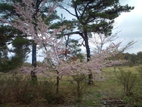 26.4.2013 七尾市わくらの郷公園 #4