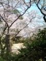 15.4.2014 小丸山公園 #7