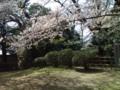 15.4.2014 小丸山公園 #8