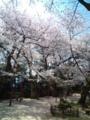 15.4.2014 小丸山公園 #9