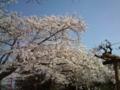 15.4.2014 小丸山公園 #14