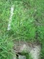 三角点 中能登町小竹 #2