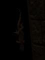 22.8.2014 蜥蜴? #1