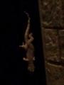 22.8.2014 蜥蜴? #2