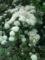 20.5.2015 謎の花