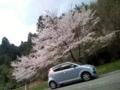 11.4.2016 実家近くの桜 #2