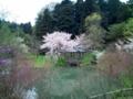 12.4.2016 赤倉神社 #3