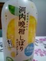 JT 河内晩柑しぼり・スパークリング #2