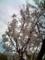 5.4.2018 桜花 #1