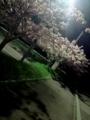27.4.2018 夜桜風味の八重桜 #2