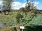 十二町潟水郷公園 ミズキの木