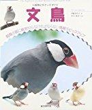 小動物ビギナーズガイド 文鳥 (SMALL ANIMAL POCKET BOOK SERIES)