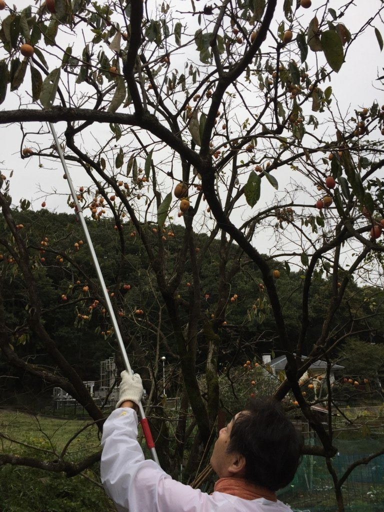 f:id:puchinpurin:20171024075005j:plain