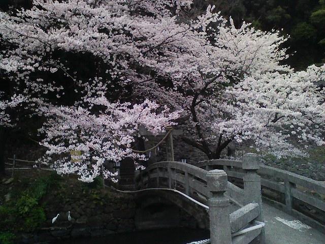 f:id:puchitenshi:20110405001042j:image