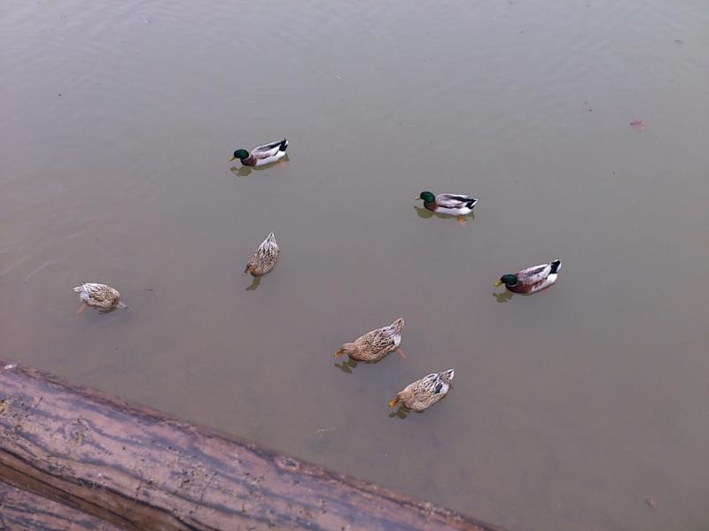 f:id:puchitenshi:20120227043433j:image