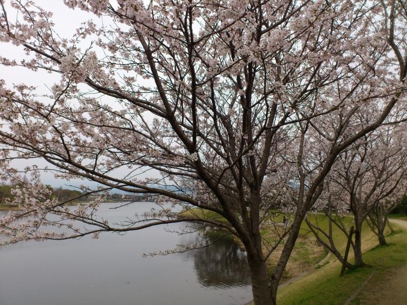 f:id:puchitenshi:20120330170820j:image